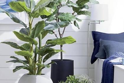 Loạt chậu trồng cây siêu xinh, nhìn là muốn rinh ngay về nhà