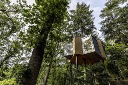 Ngôi nhà trên cây xinh xắn trong khu rừng Đan Mạch