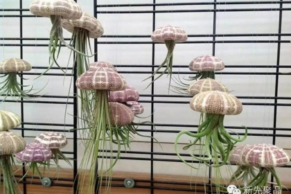 Những mẫu thiết kế chậu cây treo trong nhà độc đáo