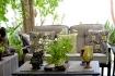 Phong thủy giúp nhà tăng sinh khí nhờ cây