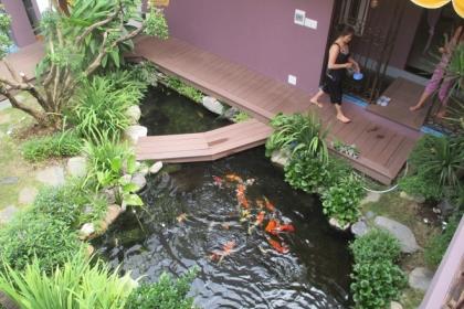 Ao cá xanh mát trong lòng ngôi nhà phố ở Bình Dương